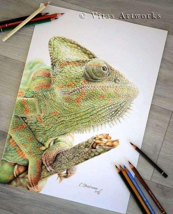 08-Chameleon-Carolin-Behnke-www-designstack-co