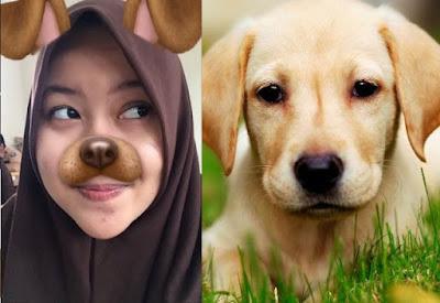 WAJIB KALIAN BACA, Inilah Hukumnya Menggunakan Aplikasi Wajah Anjing yang Sedang Kekinian