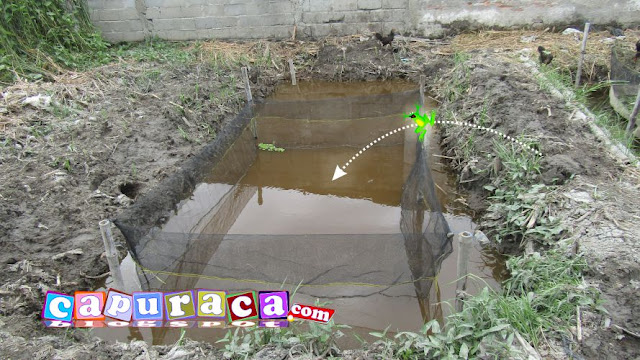 Kelebihan dan Kekurangan Kolam Tanah Jaring Apung