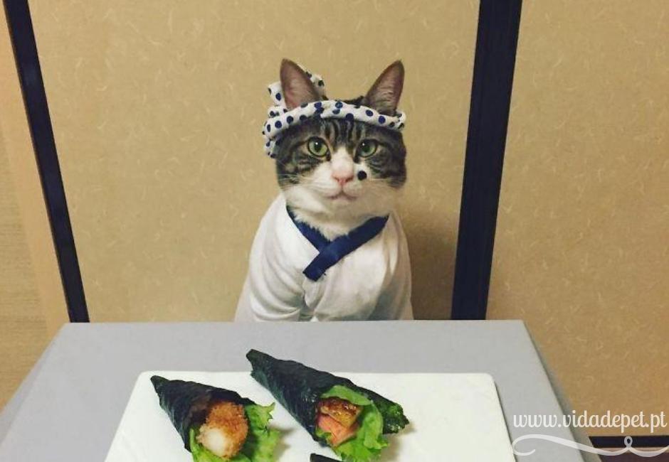 o gato veste-se para jantar com a dona + promove comida no instagram de gatos + blogue português de animais de estimação+ vida de pet .pt + Pedro e telma