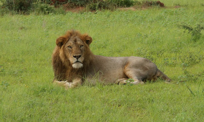 3 Day Wildlife Safari -Queen Elizabeth National Park- Short Safari in Uganda