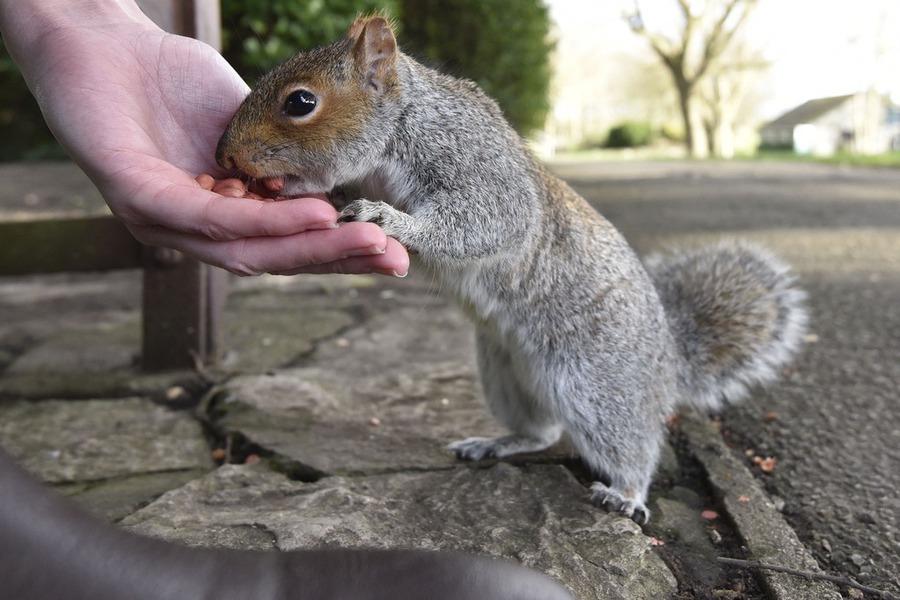 nevjerojatna maženje vjeverica