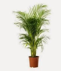 harga tanaman hias bandung