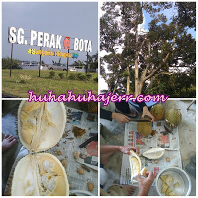 Misi Balik Kampung Kelahiran, Bota Perak Dek Panggilan Musim Durian
