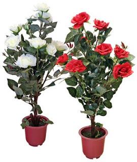 gambar bunga mawar indah 37