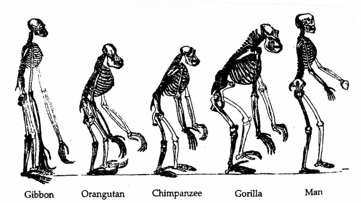 Biyoloji Türkiye: Charles Darwin