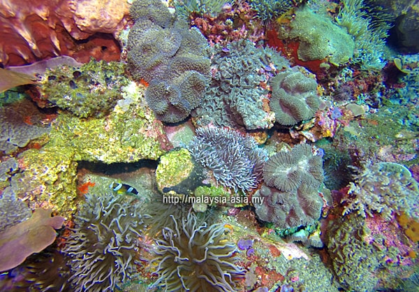 Best dive site at Alor Island