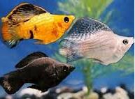 Jenis Jenis Ikan Hias Dan Harganya 5000/3 ekor Di Pasaran
