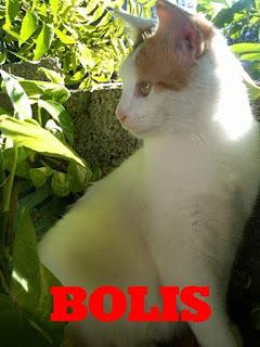 bolis-magico-mundo-felino-de-niki