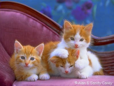 مجموعه رائعه من صور لحيوانات عاليه الجوده photo المجموعه الاولى
