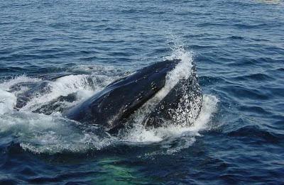 Marketing passa ideia asssustadora, mas na prática não falta alimento para as baleias