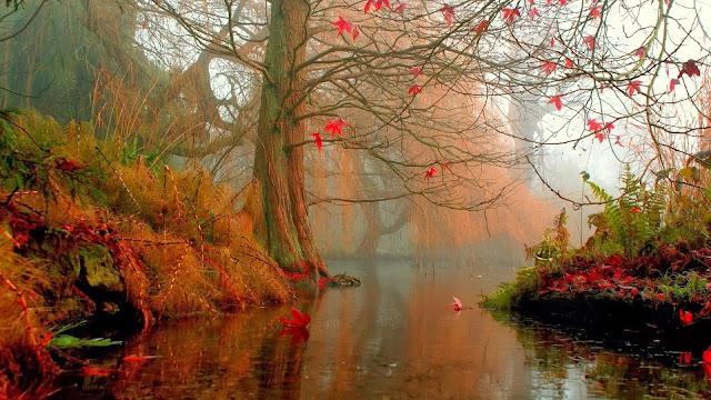 Beekje in het bos in de herfst