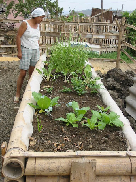 huertos urbanos para producir alimentos