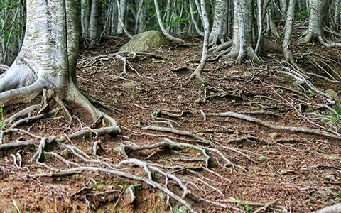 Invasive tree roots damage landscapes and hardscapes resulting in expensive repairs