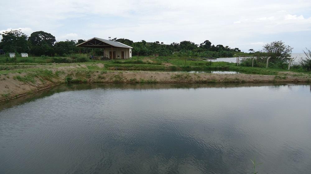 Aquaculture et pisciculture en Afrique