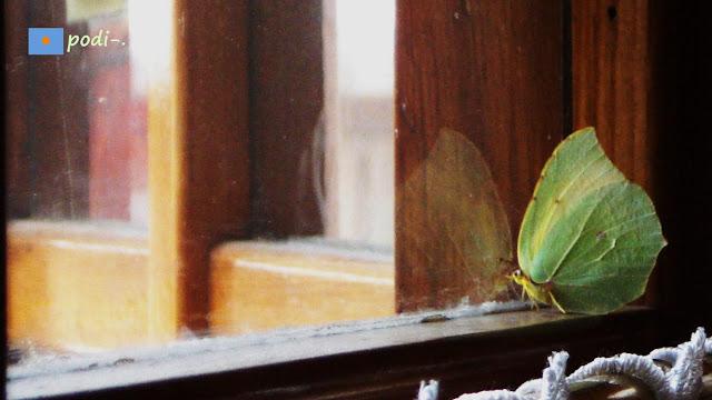 farfalla in finestra mariposa en ventana