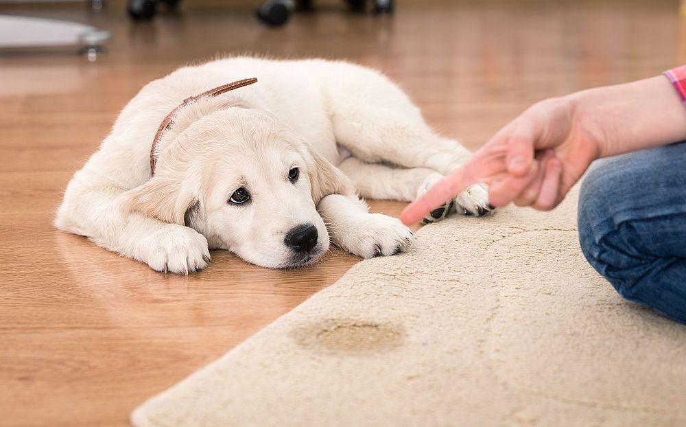 Assistir soltando os cachorros online dating
