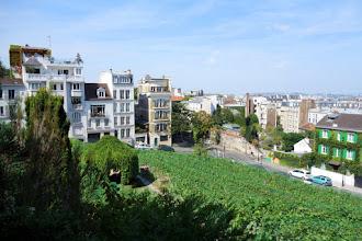 Paris : Vigne de Montmartre, la tradition réinventée - XVIIIème