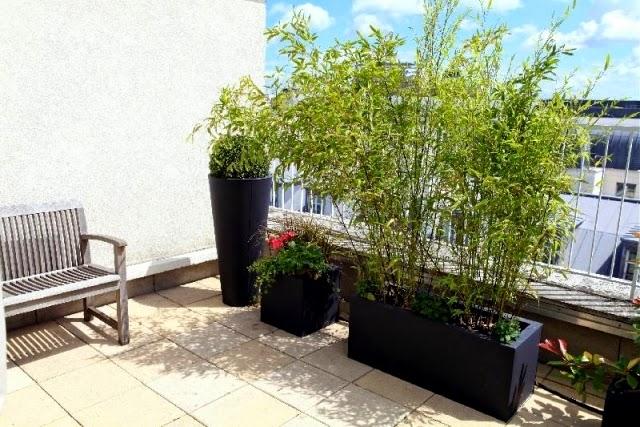 bambusy os oni tw j taras przed ciekawskimi s siadami. Black Bedroom Furniture Sets. Home Design Ideas
