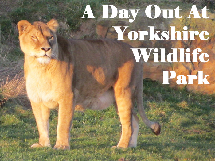 Yorkshire wildlife park review