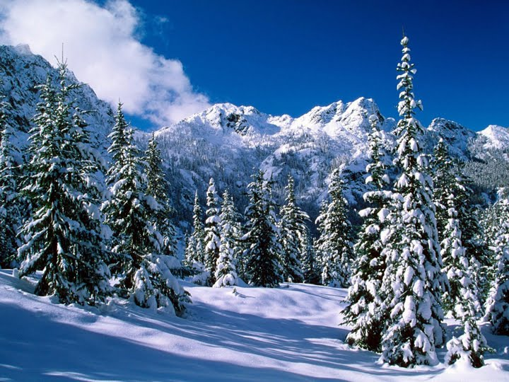 dağ ve orman manzaralı kış resimleri