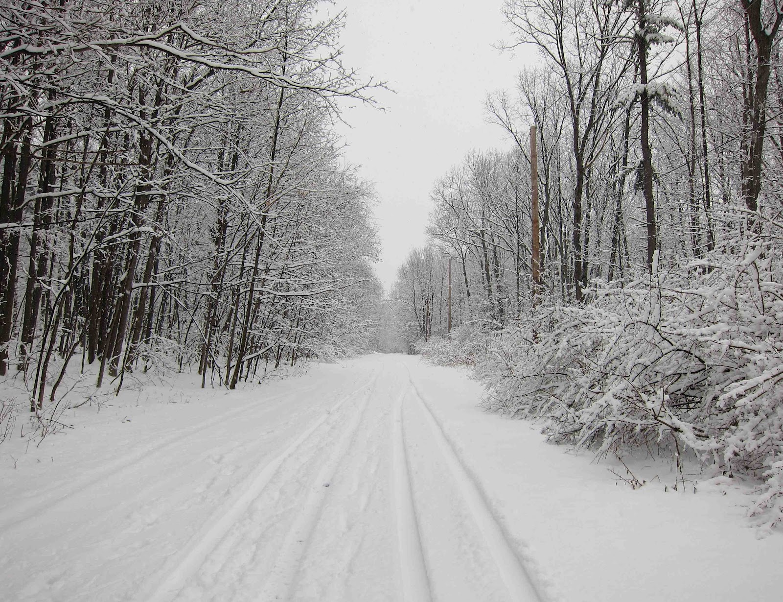 Saratoga Woods And Waterways: SNOW