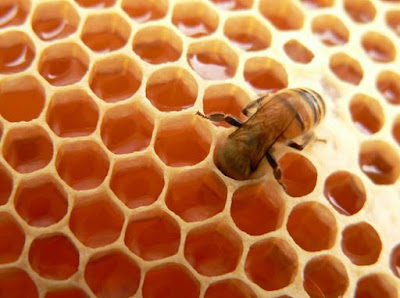 http://www.agenmadudanherbal.com/2016/11/5-khasiat-madu-untuk-kesehatan-kulit.html