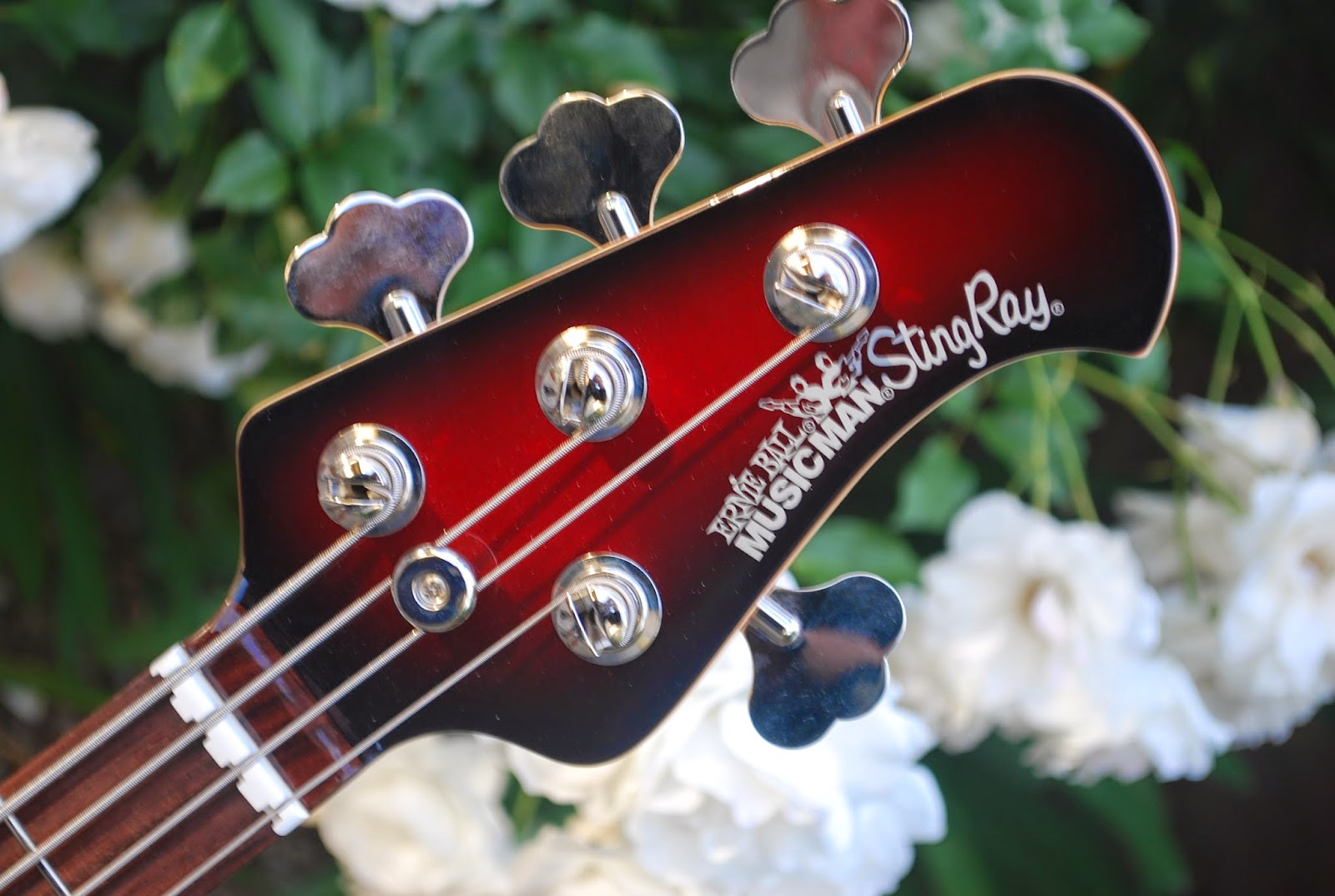 rex and the bass 2011 ernie ball musicman stingray bass review. Black Bedroom Furniture Sets. Home Design Ideas