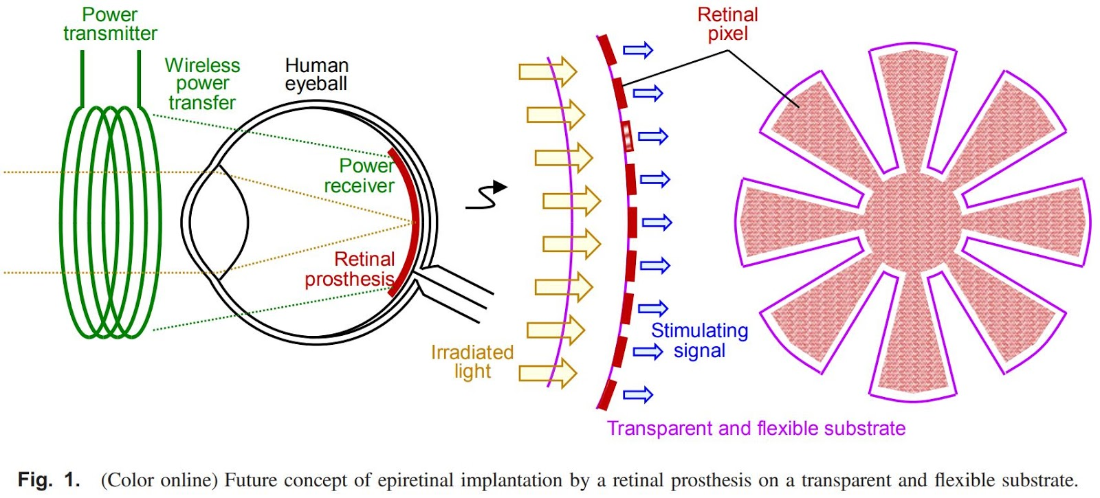 Image Sensors World Tft Sensor For Retinal Prosthesis Wireless Power Transmitter Circuit By Assembling The Photosensing And Transfer System Stimulating Performance Is Confirmed In An Vitro Experiment