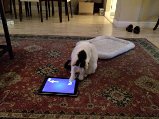My cat running a game of Cat Fishing on the iPad.