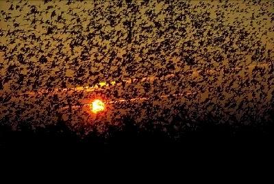 Sol Negro - Sort Sol - Dinamarca