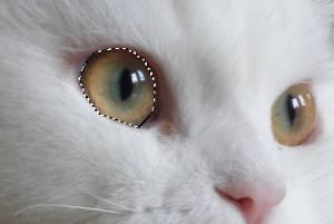 Como mudar a cor dos olhos nas fotos