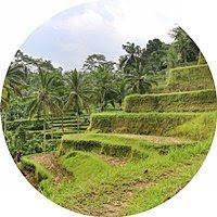 Tegalalang-Rice-Terrace-Bali
