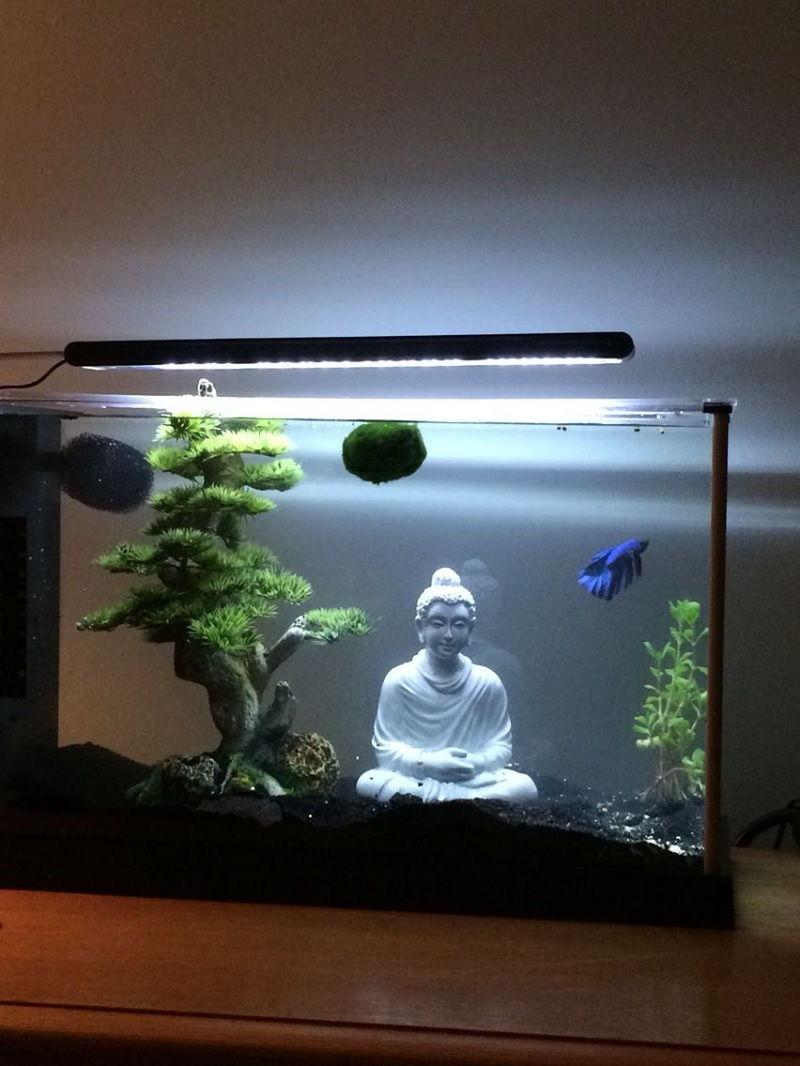 Betta Fish Aquarium Decor