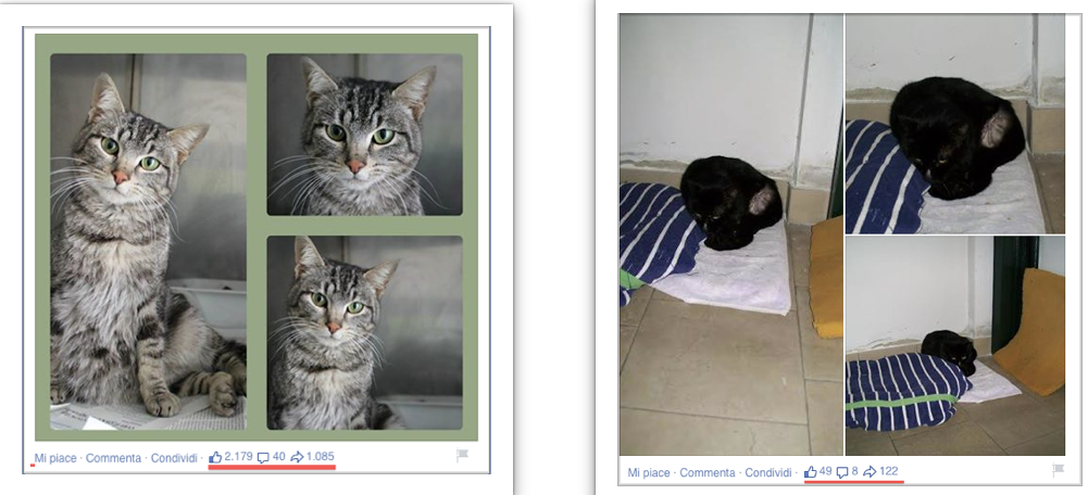 foto-di-gatti-in-adozione