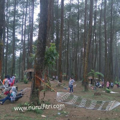Bermain hammock di Hutan Pinus Cikole Bandung