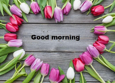 Good morning images with flowers HD download - Tulip flower images free download
