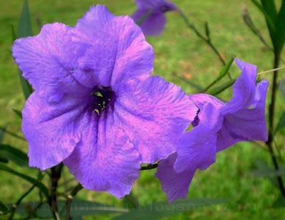 NamaNama Bunga Di Malaysia