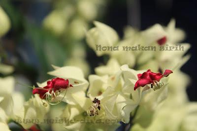 Nona Makan Sirih (Rumah Bunga Neisha)