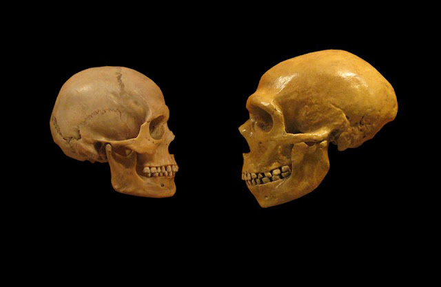 New look at archaic DNA rewrites human evolution story