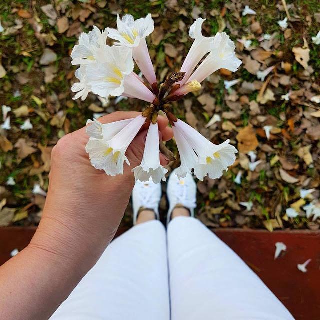 preto branco estiloso, look preto e branco, pantacourt, body, blog de moda, blog de dicas de moda, o melhor blog de dicas de moda