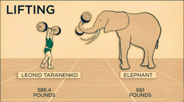 insan vs hayvan