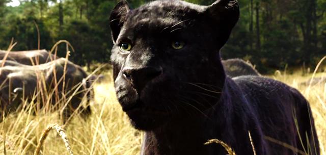 Bagheera în Cartea Junglei 2016