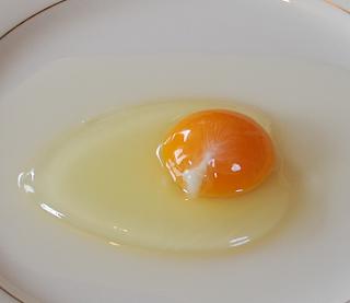 Putih Telur Untuk Burung
