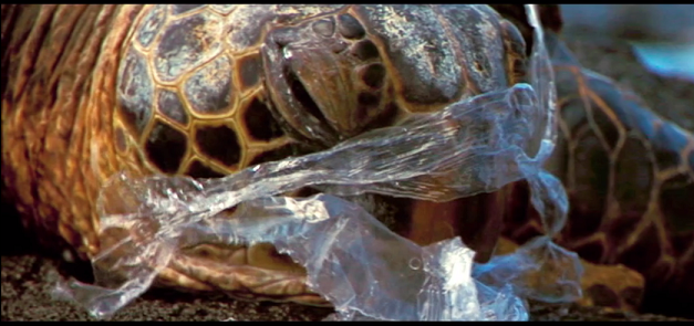 "Fograma del clip ""See how it feels to be an ocean animal stuck in a plastic bag"" de National Geographic"