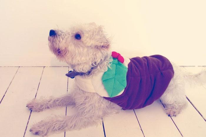 pets at home christmas jumper