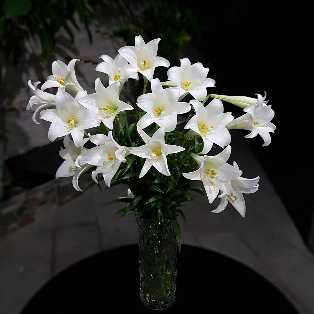 Ảnh Hoa Bách Hợp (Hoa Loa Kèn) Đẹp Thanh Khiết, Thân Ái & Ý Nghĩa
