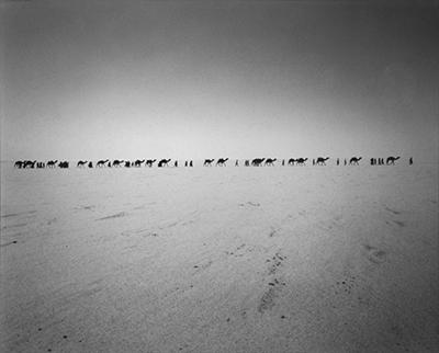 http://kvetchlandia.tumblr.com/post/152433480288/raymond-depardon-caravan-niger-africa