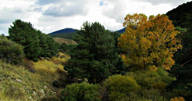 La Panera en otoño - AlfonsoyAmigos