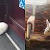 Kelinci Hebohkan Warga Inggris Keliling Kota Dengan Bus